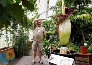 世界最臭花朵比利时绽放 高1.9米