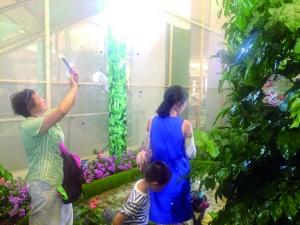 常州市民在蝴蝶温房里参观拍照