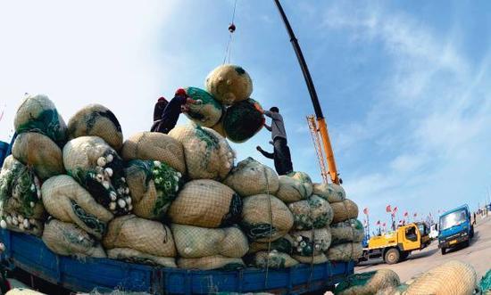 6月1日,河北省黄骅市南排河镇渔民将渔网卸船装车(李宇摄)