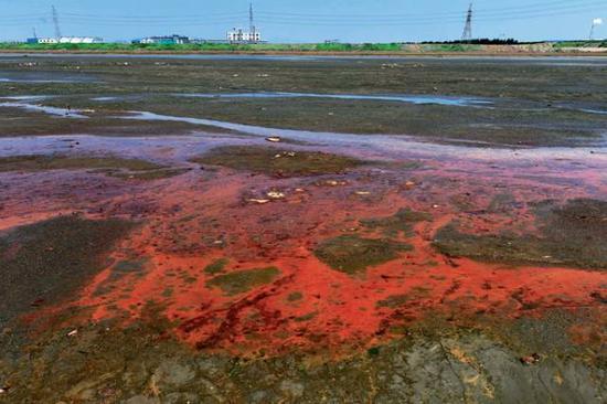 辽宁省葫芦岛市新厂大桥附近,退潮后,河床裸露出来,河道里的喝水呈红色。(李钢7月5日摄)