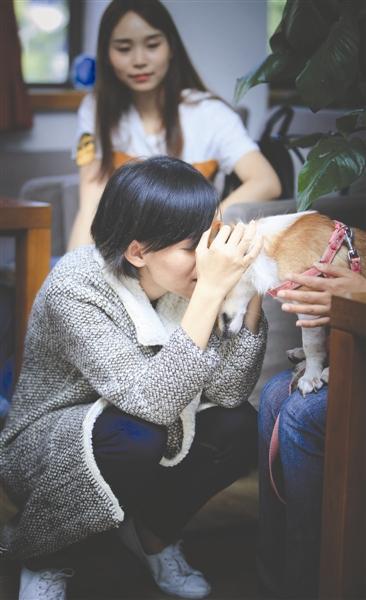 重病女孩跨越千里为爱犬寻新主人:只要真的爱它