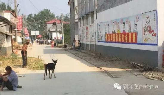 孙庄村一角。