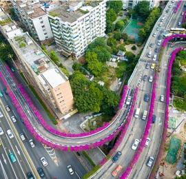 """簕杜鹃盛放 航拍广州高架桥""""紫红花道"""""""