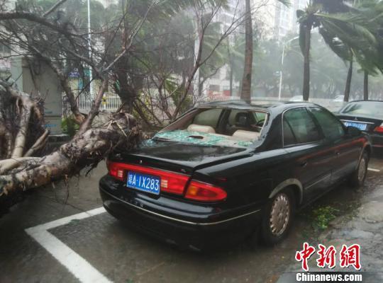 """""""莎莉嘉""""给海口带来较强风雨,有胸径较粗的大树倒下砸到路边车辆。 符策伦 摄"""