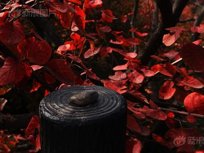 枫染红叶岭,最叹秋意浓
