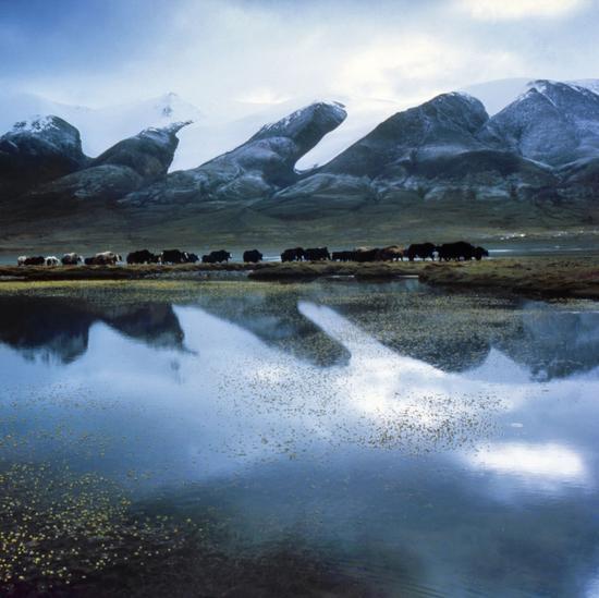长江,尕尔曲的湖泊。