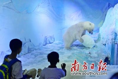 """""""最悲伤北极熊""""被送走 海洋馆否认迫于舆论 新闻"""