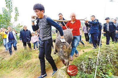 野猪进小区伤2人被击毙 官方:分困难户和伤者吃