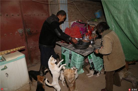 退休女教师为救助240只流浪狗 卖掉女儿陪嫁房