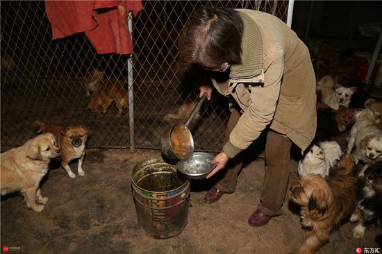 图为文丽老师正准备喂狗。