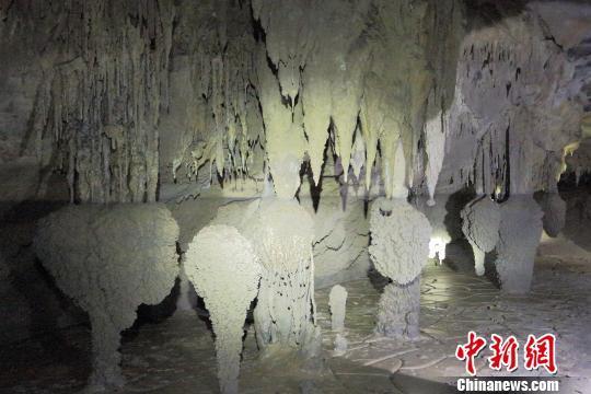 图为坑底溶洞内分布的石钟乳。陕西省国土资源厅供图