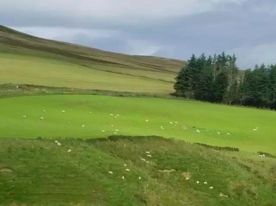 苏格兰的牧场(草地上的白点是羊群)