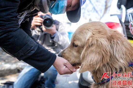 爱狗人士喂金毛喝水。