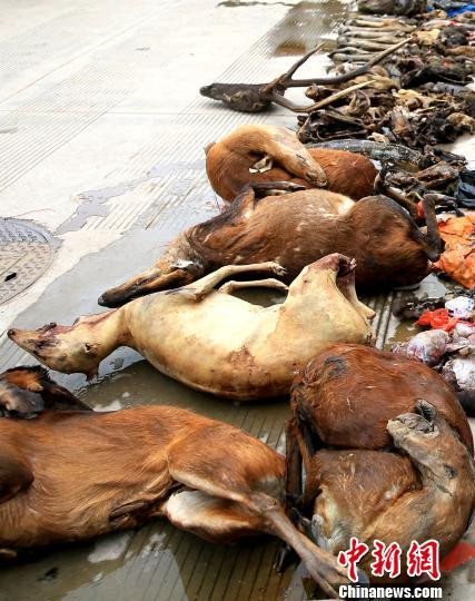图为准备公开焚毁的部分野生动物死体 常宗波 摄