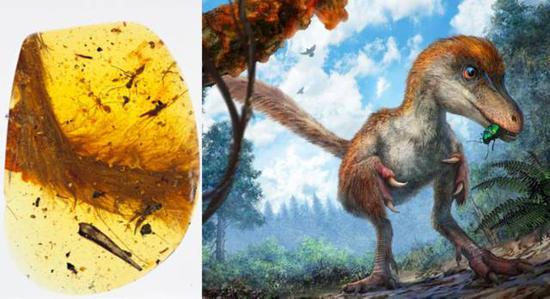 琥珀中的恐龙标本(左)和该标本所属的恐龙复原图(右,局部)。图片来源:左:Royal Saskatchewan Museum (RSM/ R.C. McKellar);右:Cheung Chung-tat