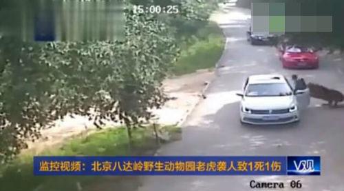 北京老虎伤人事件家属申请异地审判被拒