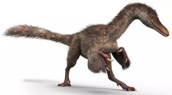"""琥珀中恐龙尾巴的主""""龙""""生前可能长这样。图片来源:CHEUNG Chung-tat and LIU Yi"""