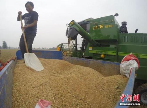 资料图:农民收获粮食。中新社记者 张娅子 摄
