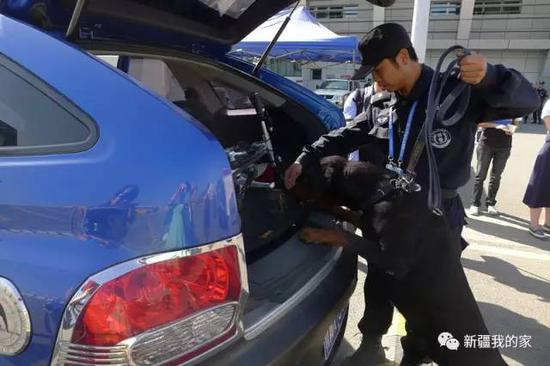 参加会展活动还有警犬检查车辆