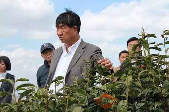 痴迷普洱茶的沈培平组织各种普洱茶会议和活动。