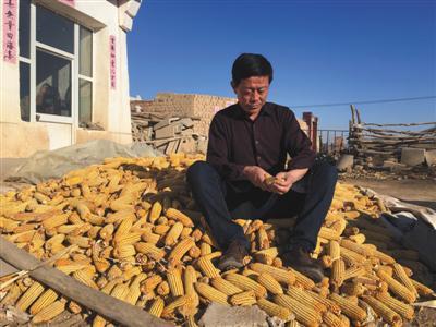 2月11日,王力军在自家门口的玉米堆里。新京报记者 江峡 许研敏 摄