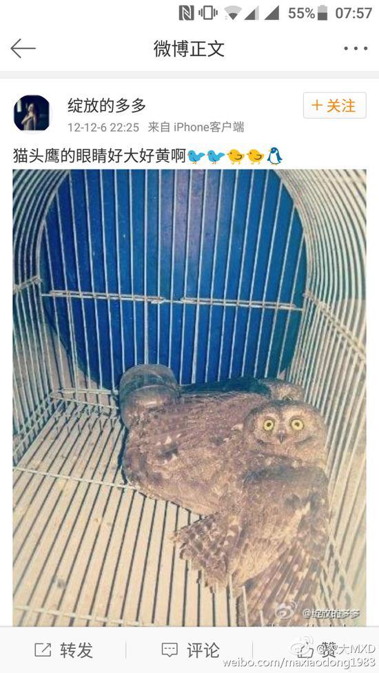 """网友称其猫头鹰也没""""放过""""。"""