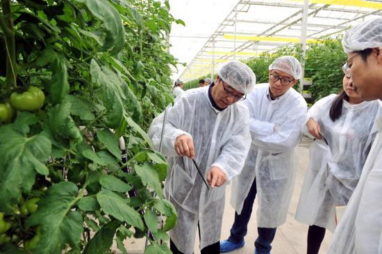 2月15日,科技职员在智能温室检察水肥一体化精准浇灌状况。