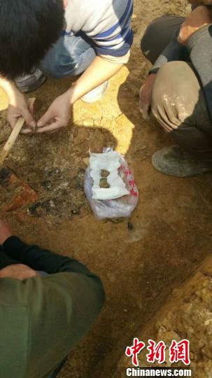 古墓中发掘的古币。 龚永成 摄