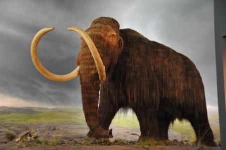 猛犸象 网络图片
