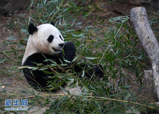 """大熊猫""""宝宝"""""""