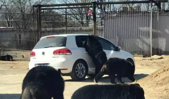事发现场图片,熊爪已伸入车窗内