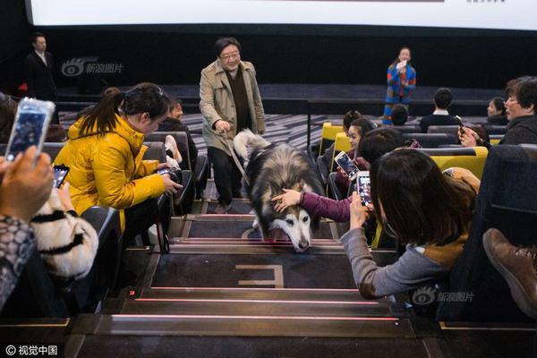 狗狗获准进入电影院观影 原因很暖心