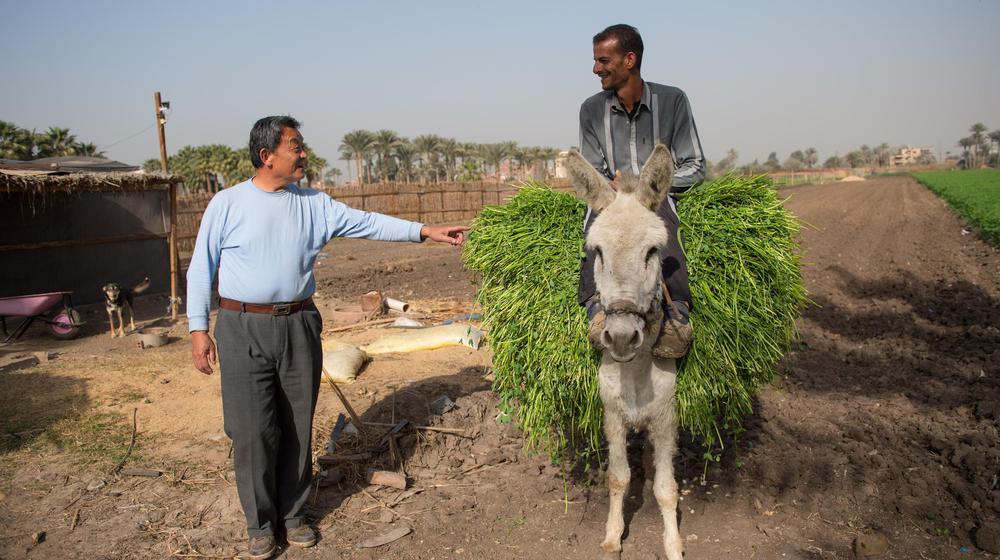 华人圈:流落埃及八年靠种菜发家