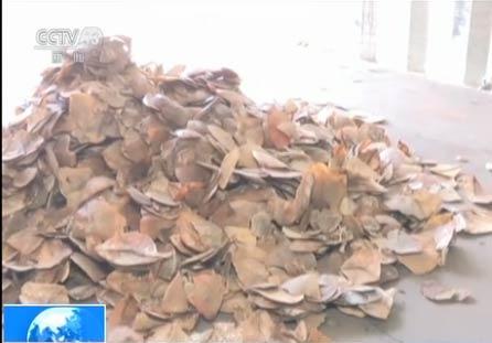 上海海关查获3.1吨穿山甲鳞片 数千穿山甲遭杀戳
