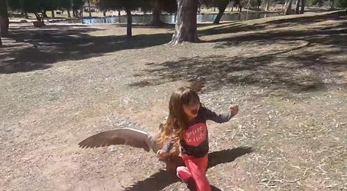 小女孩公园里欺负大鹅遭反击 尖叫逃跑