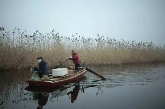 白洋淀,清早捕鱼的村民,他们凌晨一两点钟就会出船