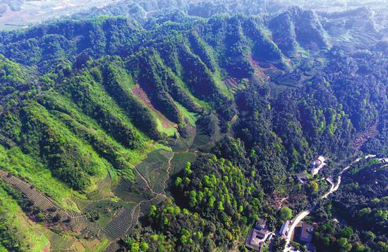 """②2017年4月27日,四川省雅安市雨城区后盐村,从高处俯瞰人形图案的头部,可以看见是由一些沟壑形成的。专家认为正是这种冲沟在视觉上构成了""""斯巴达勇士""""的发髻。"""