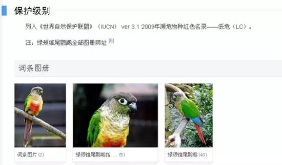 小太阳鹦鹉(学名绿颊锥尾鹦鹉) 图据百度百科