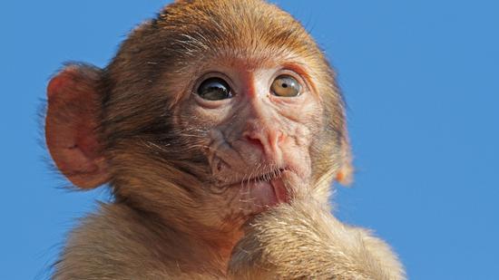 猕猴。资料图