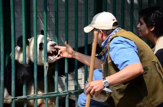 """饲养员艾利亚斯在检查""""欣欣""""的牙齿"""