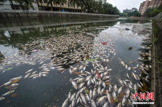 资料图:2014年4月4日,位于海南省海口市振兴南路美舍河一号桥处出现大面积死鱼,形成条带状,在河面延伸超一公里长,并散发腥臭味。中新社发 骆云飞 摄
