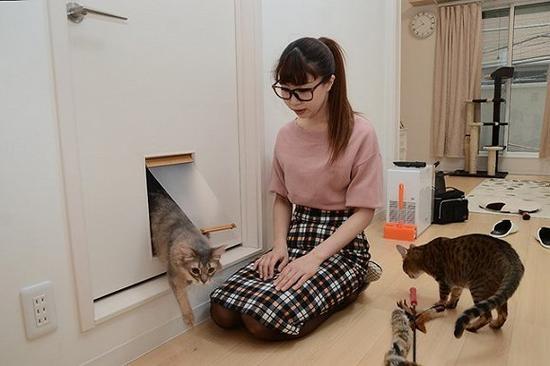 为养猫人士设计的loft