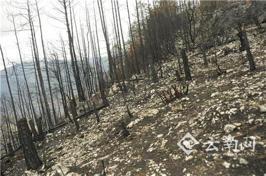 销毁的树木。