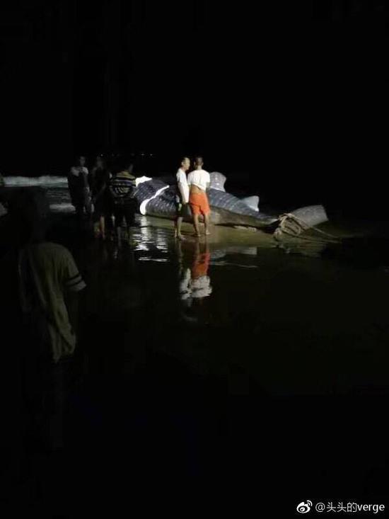 6月,一头鲸鲨在万宁市某海滩被切割。