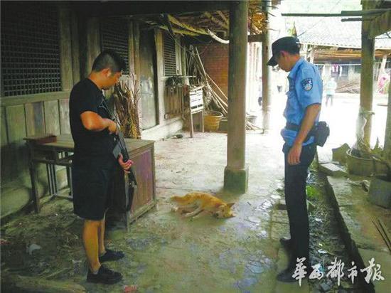 伤人的疯狗被民警击毙。华西都市报 图
