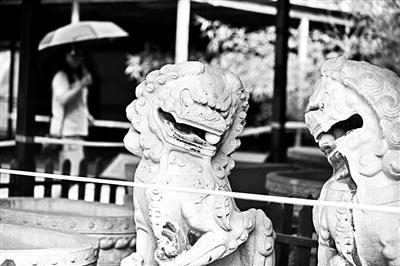 8月8日,圆明园流散文物展,左侧的石狮子口中仅剩一颗石球。北京青年报 图