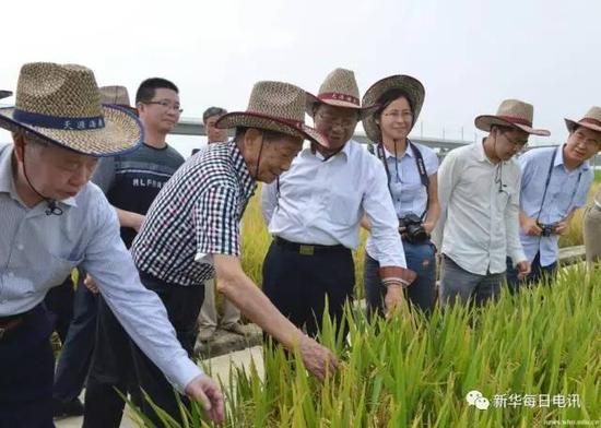 2013年5月,朱英国(左一)与袁隆平院士(左二)、谢华安院士(左三)等在海南考察红莲型水稻新品种珞优8号等产品