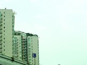 如今,楼顶又出现成片绿植。