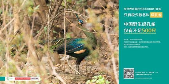 保护绿孔雀宣传海报。