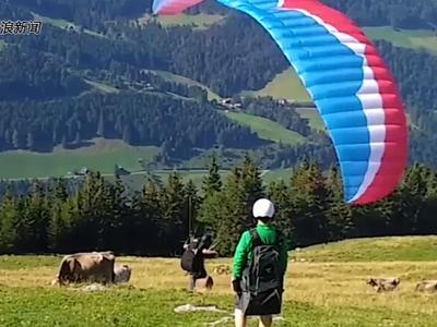 瑞士一滑翔伞爱好者尝试起飞不慎撞上奶牛